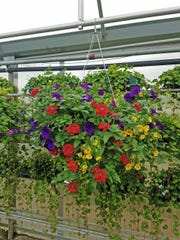 The amount of space you have can determine the size and shape of your hanging baskets. This one would need a good-size porch area.