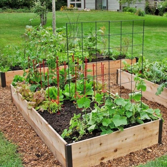 Home gardens are on the rise as people stay home during the coronavirus pandemic.