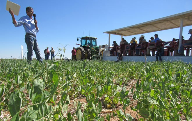 A five-year study by New Mexico State University cropping systems agronomist Rajan Ghimire, here speaking to visitors in 2019, found that integrating cover crops into existing cropping systems can increase the biological health of soils on hot and dry semiarid lands.