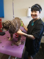 On Friday May 1, 2020, Inyoung Merchant, owner of Pride & Groom, a pet grooming service, gives Daisy, a spaniel a haircut. Merchant said she was happy to be able to open and start bringing some income in for her family, after a five-week closure. Her husband who is a massage therapist also had to close his business, leaving them without any income.