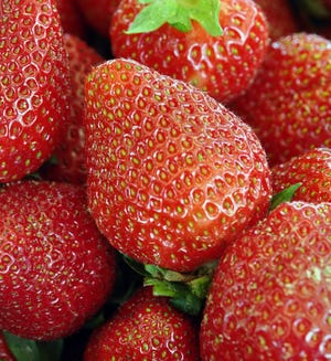 The strawberries have arrived at Sparacio Farms. But because of COVID-19 concerns, so has a new procedure for purchasing them!