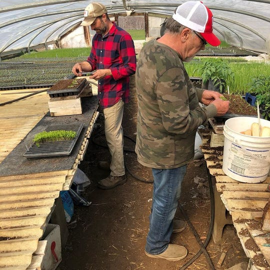 Marco (left) and David Picasso plant peppers at Cherry Rock Farms in Brandon on April 20, 2020.