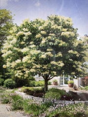 A lilac tree is a small-scale addition that can fit well in front of a home.