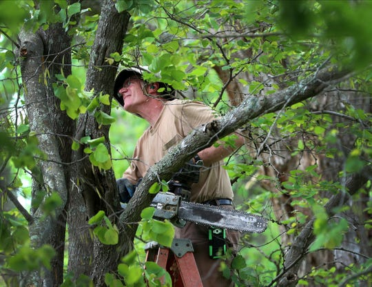Paul Alexander cuts a broken limb out of a redbud tree in a neighbor's yard on Monday May 4, 2020, in Murfreesboro after a wind storm blew through Sunday afternoon.