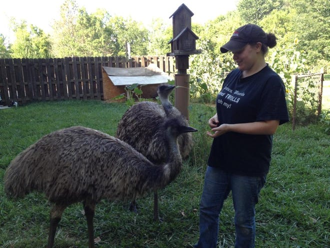 Susan Churchwell of Milford with emus Sydney and Darwin, the latter of which escaped home on May 3, but was found the next day.