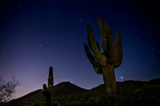 Stars over cacti at Usery Pass in Mesa, Ariz. on May 2, 2020.