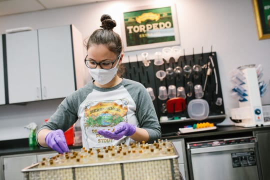 Chelsea Berens works in Sierra Nevada Brewing Co.'s quality assurance lab in Chico, California. The brewery is making the much in-demand viral transport medium needed to preserve COVID-19 tests for nearby Enloe Medical Center.