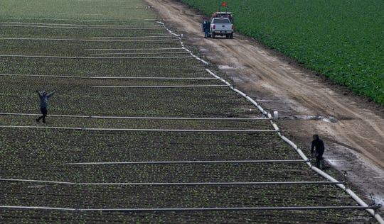 En esta foto de archivo, un vehículo conduce el 2 de mayo del 2020 por un campo en el Valle de Salinas, donde campesinos trabajan para cosechar y empacar los alimentos que surten a los comercios.
