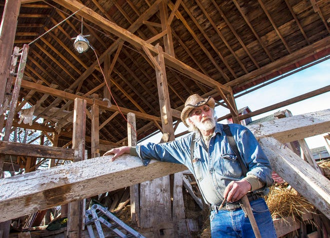 Dan Sutton stands next to a barn beam that he has started to remove from a barn in rural Morrison, Ill.. The barn, located off of Route 30, is the 95th barn that Sutton has dismantled to reclaim the lumber since starting reclaiming lumber in 1980.