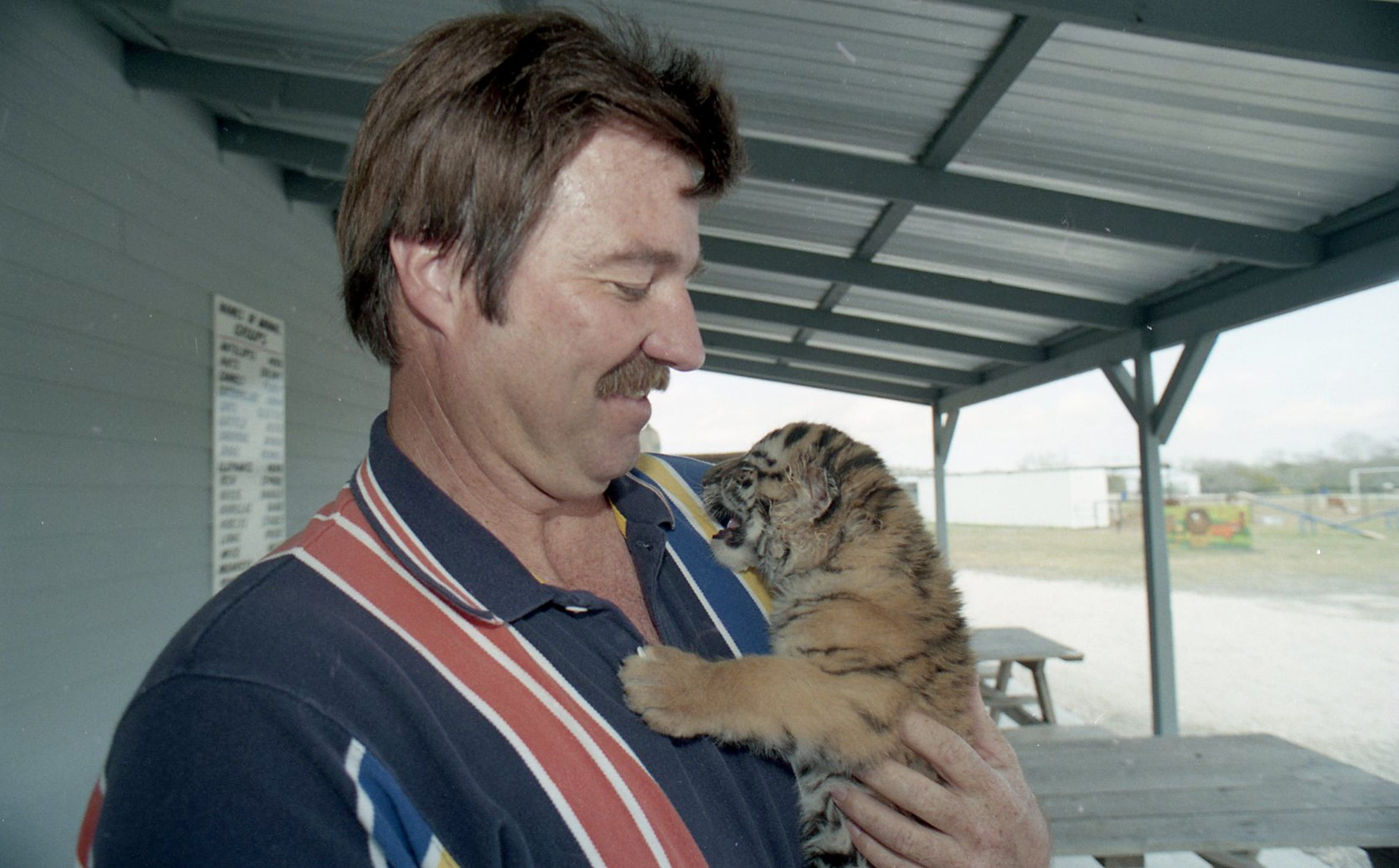 Wayne Shambo holds a one-month-old baby tiger that they will be raising at Wayne's World Safari in February 1999.
