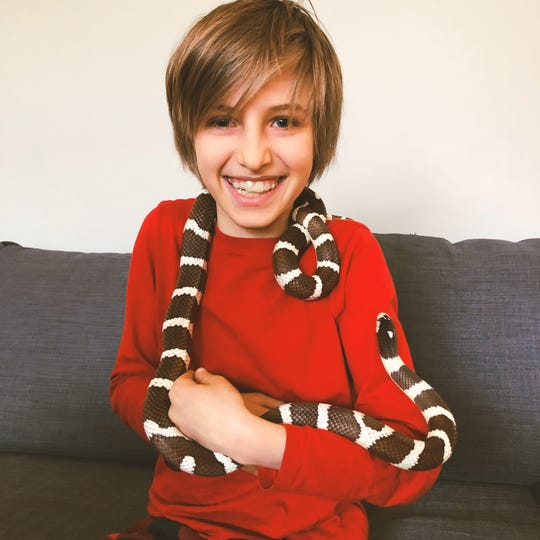 Matthew Paddock, 10, plays with Red, a 5-foot California king snake that his father, Jonathan Paddock, brought home from Clarkston Middle School.