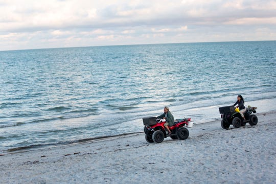 Collier County's Principal Environmental Specialist Maura Kraus, left, drives along the shore north of the Naples Pier looking for sea turtle nests on Wednesday, May 6, 2020.