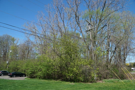 This wooded lot just east of Northville Forest apartments is slated for potential development in Northville Township.
