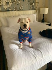 Cole the Deaf Dog enjoyed some creature comforts during his stay in New York to appear on the Rachael Ray show.