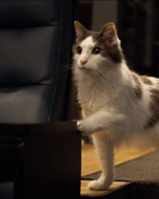 Isabella the cat is ready for her theater close-up to promote the Quarantine Cat Film Fest