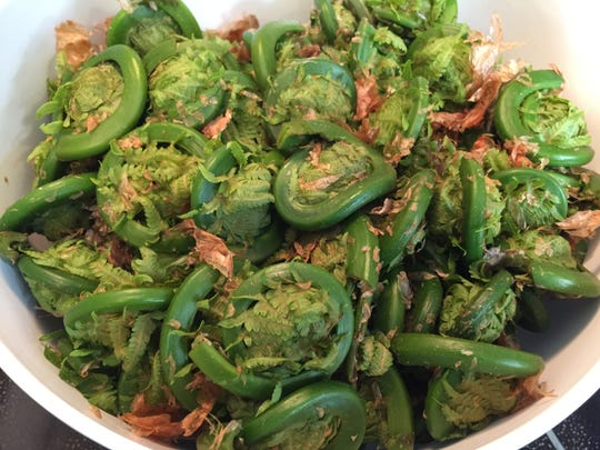 A batch of fiddleheads harvested May 5, 2020.