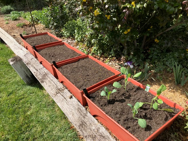 Dorothy Duff, a Southwest Harvest for Health Master Gardener co-coordinator involved in a study pairing gardners with cancer survivors, said one of her participants had gardened before but had to put it aside due to her diagnosis and medical treatments. She said this project has infused her with enthusiasm to get back out in the garden. The study was forced to go virtual due to COVID-19.