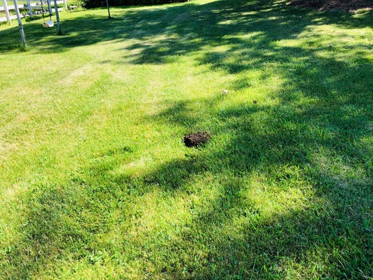 Moles can damage lawns and gardens.