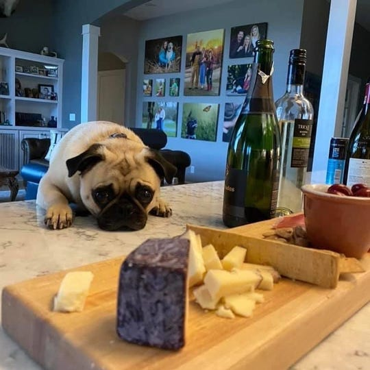 People and pups throughout Sheboygan County have been tuning into weekly virtual wine tastings with Vintage wine shop in Elkhart Lake.