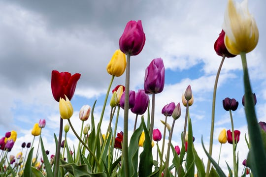 Spring flowers will be dampened by winter weather this weekend throughout the East.