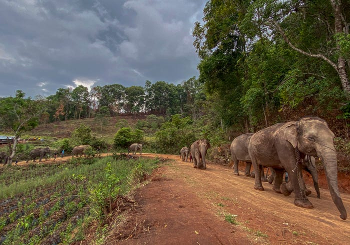 With coronavirus destroying tourism industry, tamed Thailand elephants risk starvation