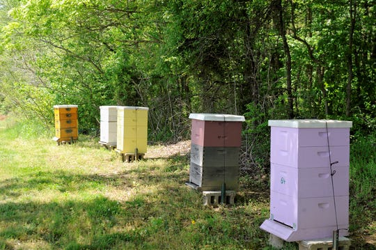 Five bee hives were installed at Mayse Farm  Market in 2019. The bees help polinate the crops, and now you can buy the honey in the market.