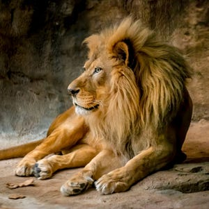 The Milwaukee County Zoo announced that Themba, an African lion, has died.