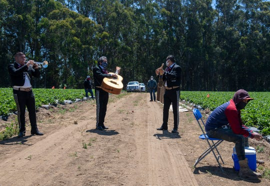 Mariachi members of the band Nuevo Jalisco serenade farmworkers during their break on Tuesday, May 5, 2020.