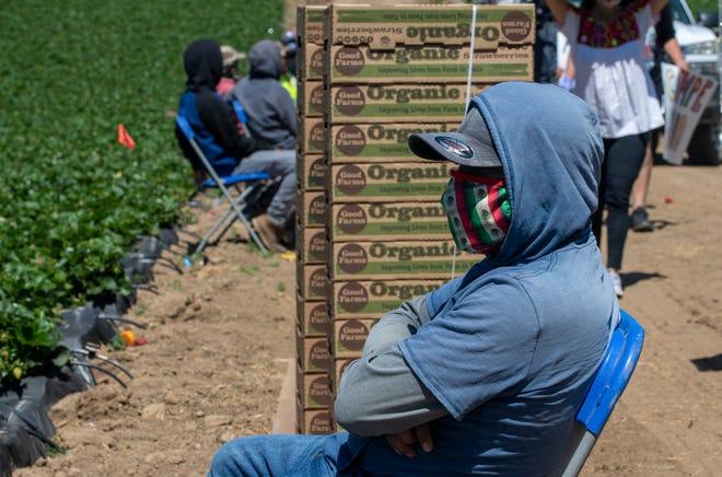 Un trabajador agrícola descansa en un campo de Watsonville el martes 5 de mayo de 2020.