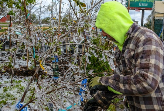 Jessie Romero, a twenty-year employee at Andy T's in St. Johns knocks off the ice on the trees and shrubs at the nursery Saturday, May 9, 2020. He watered them at 3:30 in the morning to protect them from the overnight frost. He said he may have to do this for the next few days.