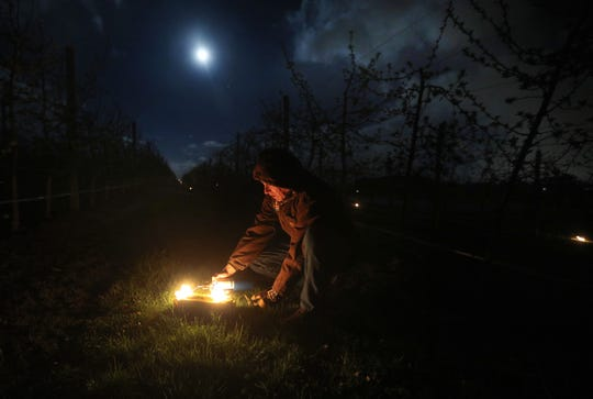 Bill Wickham of Wickham Farms in Penfield, lights Duraflame logs at 3 a.m., and places them between the rows in his apple orchard, trying to keep the buds from freezing overnight as temperatures dipped near 30 degrees. Wickham has five acres and 5,000 trees.  He used nearly 200 logs.