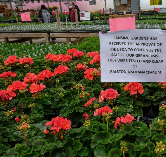 Geraniums in the Lansing Gardens greenhouse bear a sign that they have been tested and clear of a disease Sunday, May 10, 2020.