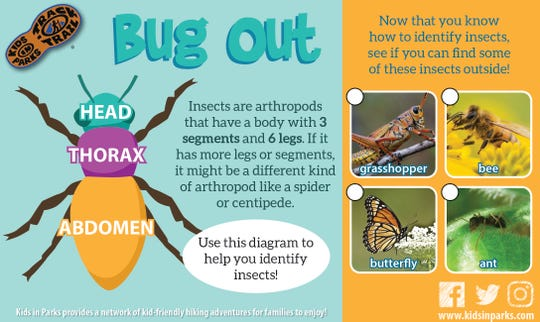 Use this diagram to help you identify insects.