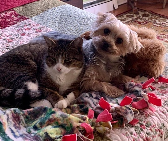 East Brunswick resident Cyndi Dawson's dog Bowie, pictured here with one of her cats, alerted her Saturday that the neighborhood postal carrier had suffered a medical emergency.