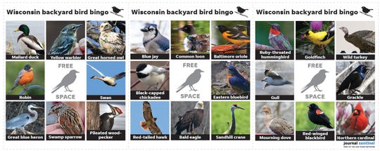 Download and print this Wisconsin backyard bird bingo with the link above to play at home.