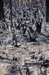 Remnants of burnt wood and ash mark the landscape off Hurst Hammock Road on Monday after a wildfire scorched more than 1,200 acres in the area last week.