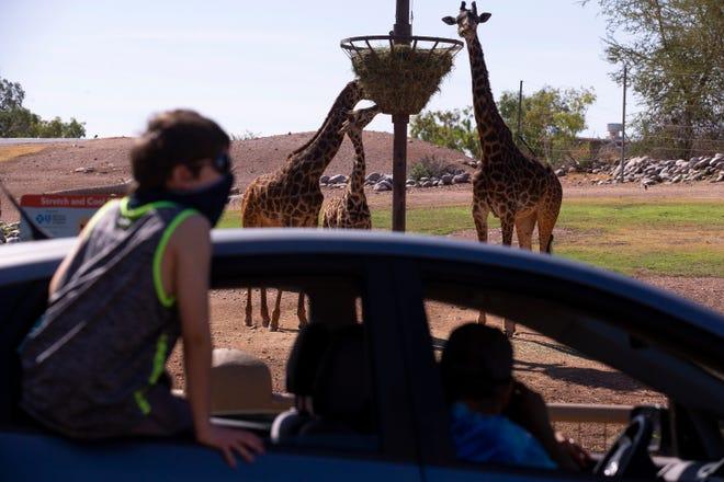 Una familia observa las jirafas durante el evento Cruise the Zoo en el Zoológico de Phoenix en Phoenix el 11 de mayo de 2020.