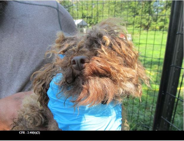 "A Missouri puppy mill owner in Elkland was cited twice in late 2019 for animal care violations by the USDA. In September, inspectors documented a brown poodle who was severely matted with an oozing lesion. This was one of 30 Missouri puppy mills in the Humane Society's ""Horrible Hundred"" annual report released May 11, 2020."