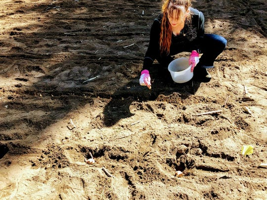 """Jerry Apps gets a little help planting early crops in the family's """"three-family garden"""" at Roshara, the family's Waushara County farm."""