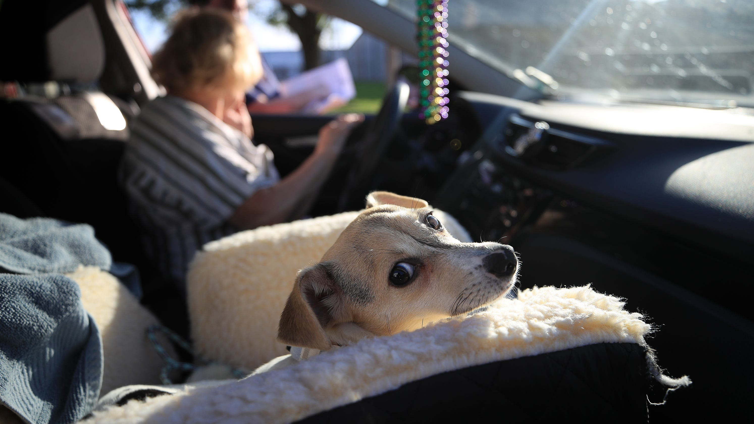 Coronavirus spike in foster pet parents could end or ...