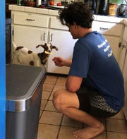 Wait, what? There's a goat in the kitchen? Well, there IS supposed to be a new normal.