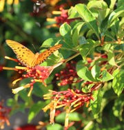 Native plants attract wildlife, from bees and butterflies to birds.