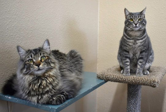 You can visit Alec and Rufus Tuesday-Saturdays from noon to 4 p.m. at the Sun Cities 4 Paws adoption location  at 11129 Michigan Avenue, Youngtown. Call 623-876-8778 or 623-773-2246 after 10 a.m. for information.