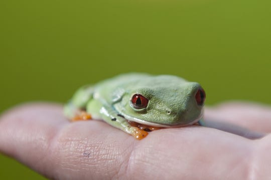 Join CU Maurice River on Zoom for a virtual Frog Slog from 7 to 8:15 p.m. May 15.