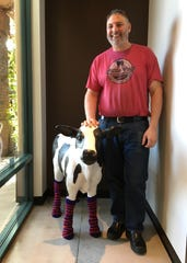 Little Calf Creamery owner Scott Levin poses with the business' sock-wearing mascot during the opening of the Westlake Village location in January.