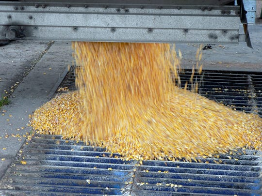 Farmers wonder about the price of corn short term and after this year's harvest.
