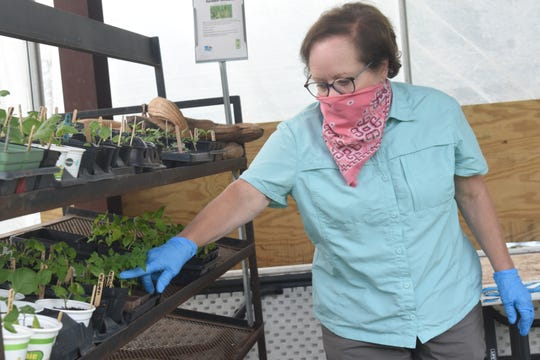 Frances Boudreaux, director of the Good Food Project which is a program of The Food Bank of Central Louisiana, shows some of the different vegetable seedlings that will be planted in the demonstration garden or given away to Food Bank clients. The Good Food Project's demonstration garden is located on the Food Bank's campus where vegetables, herbs and pollinator flowers are grown and distributed to clients.