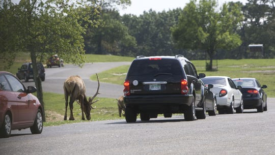 Drivers have not been allowed to take their own cars through the Six Flags Great Adventure safari since 2012.