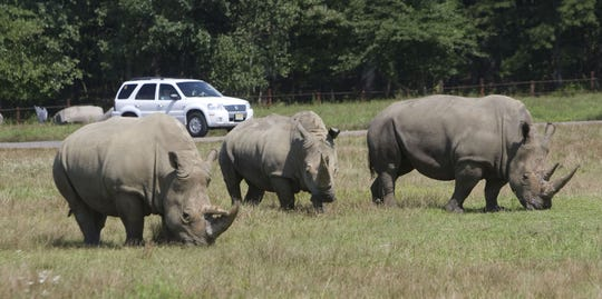 Rhinos roam the safari at Six Flags Great Adventure in Jackson in this 2012 photo.