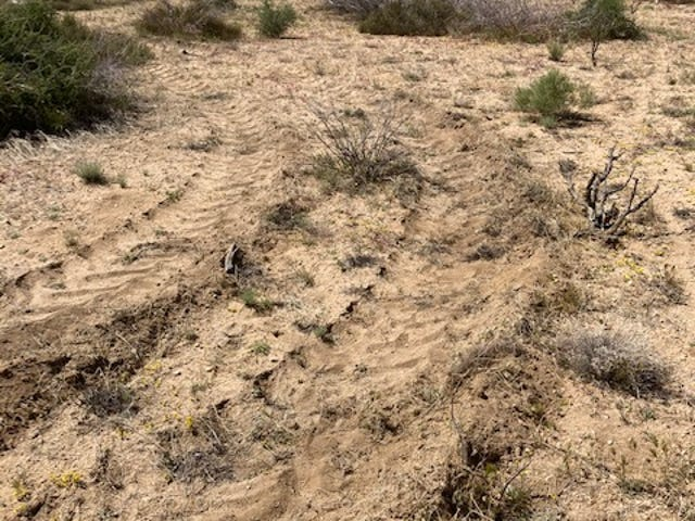 Land was dug up on April 30 in the Pioneertown Mountains Preserve in the Pipes Canyon area outside of Pioneertown. The preserve's overseers say the digging affected plants that were hundreds of years old, and they hope to get remediation.